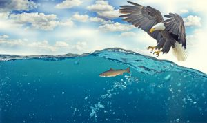 white tailed eagle 2015098 1920 300x178 - Health Effects of Eating Fish